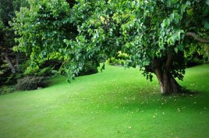 The Right Equipment Makes Seasonal Landscaping a Snap